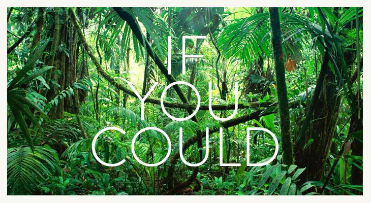 IFYOUCOULD_Identity_Nov2012-1.jpg.jpg.jpg